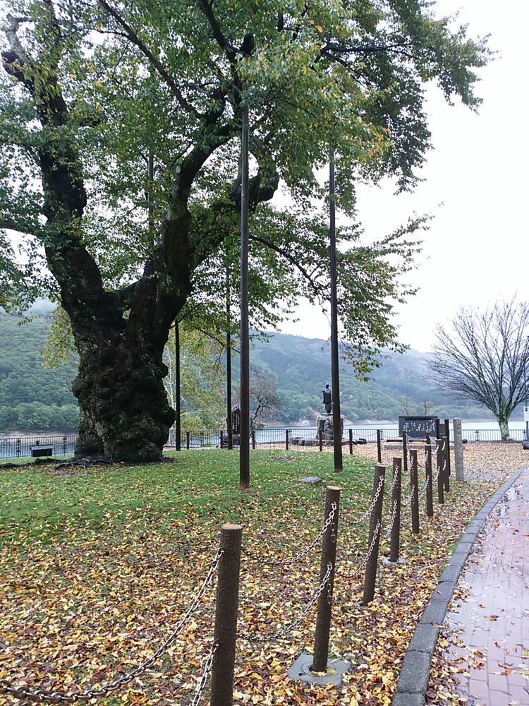 秋の荘川桜 風景8