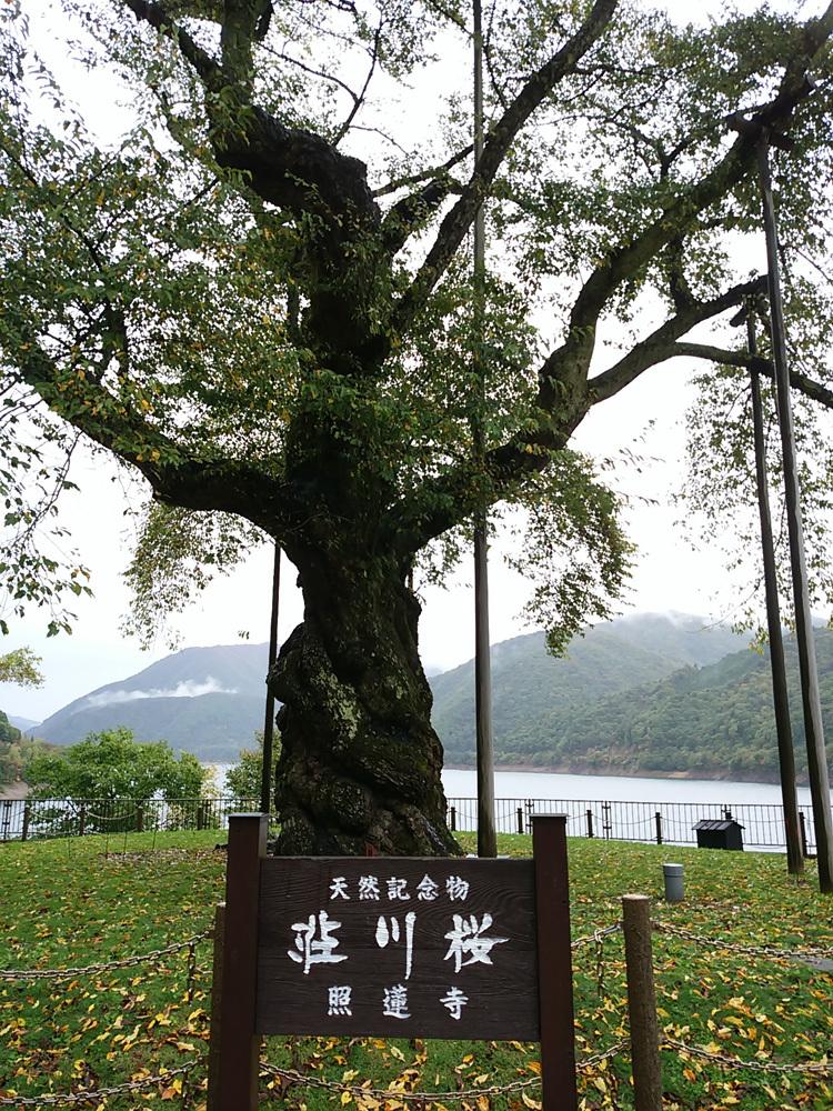 秋の荘川桜 風景10