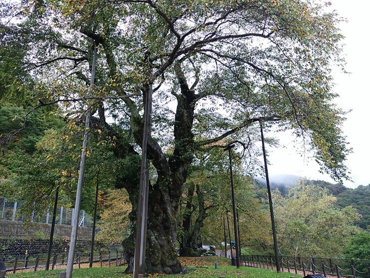 秋の荘川桜 風景11