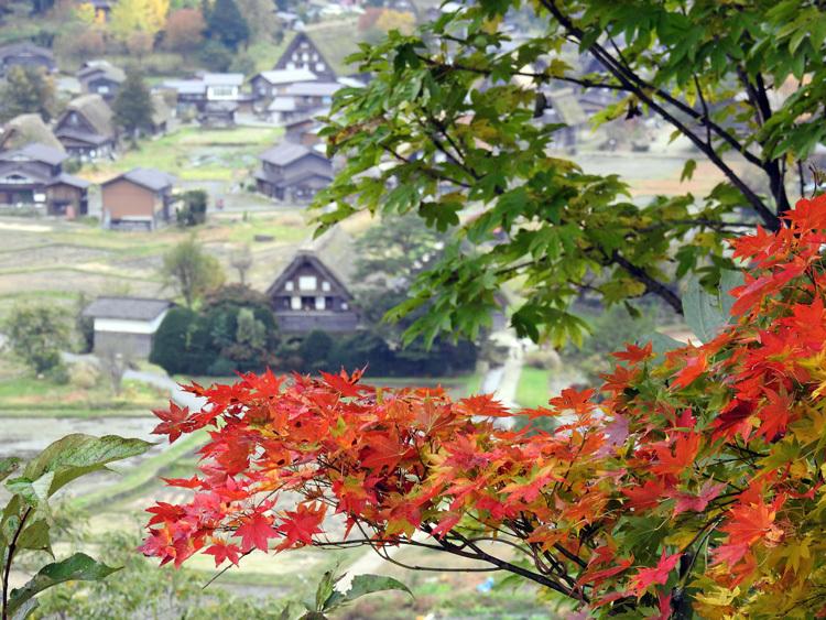 世界遺産白川郷の秋を楽しむやすらぎの旅行6