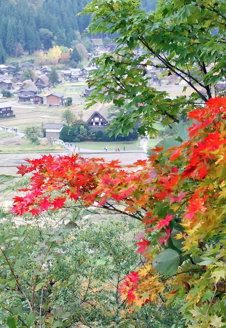 11月の3連休 紅葉の色づき 肌寒くなってくる季節 白川郷で満喫5