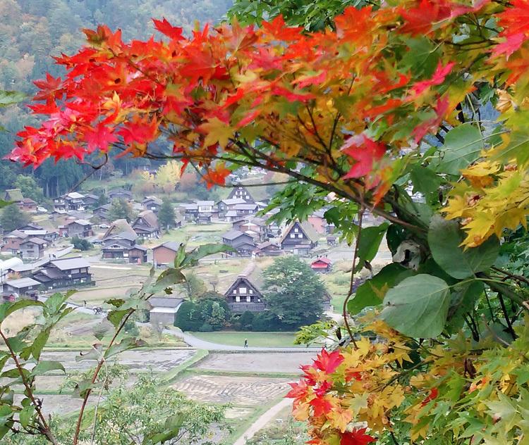 11月の3連休 紅葉の色づき 肌寒くなってくる季節 白川郷で満喫6