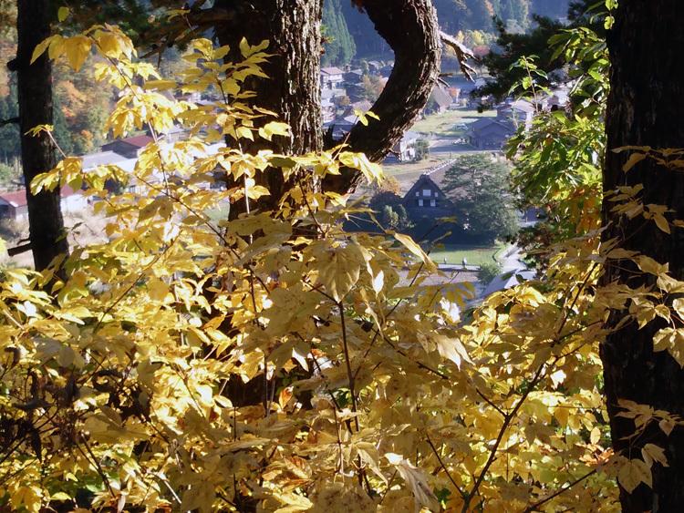 山頂から麓へと紅葉の色彩が下がってピーク1