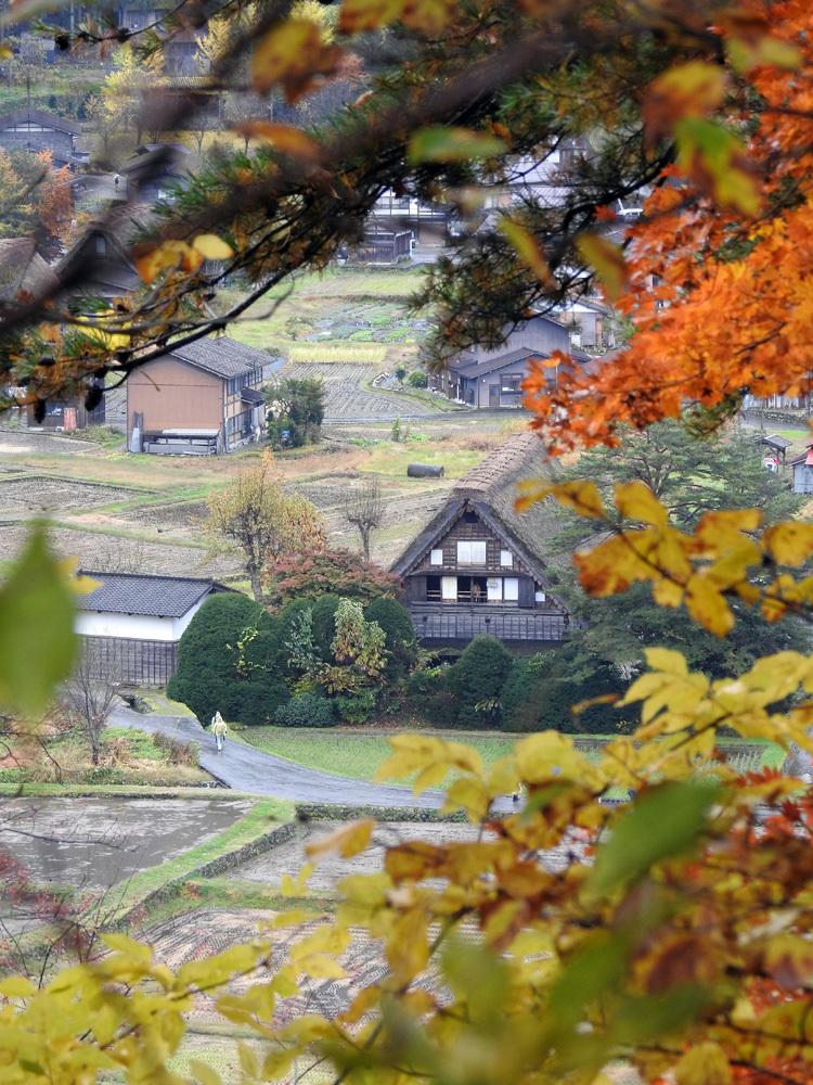 山頂から麓へと紅葉の色彩が下がってピーク4
