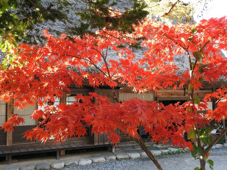 山頂から麓へと紅葉の色彩が下がってピーク10