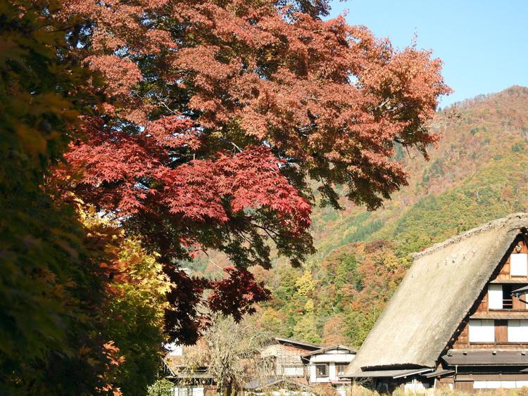 山頂から麓へと紅葉の色彩が下がってピーク11