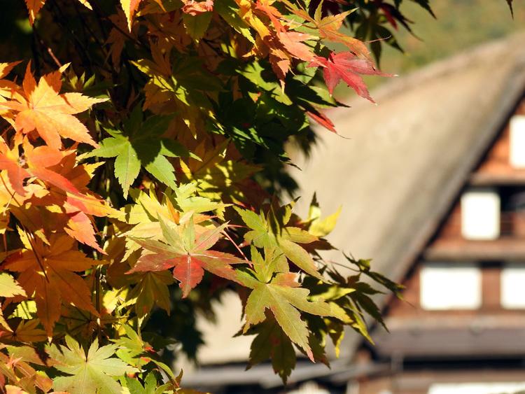 山頂から麓へと紅葉の色彩が下がってピーク12