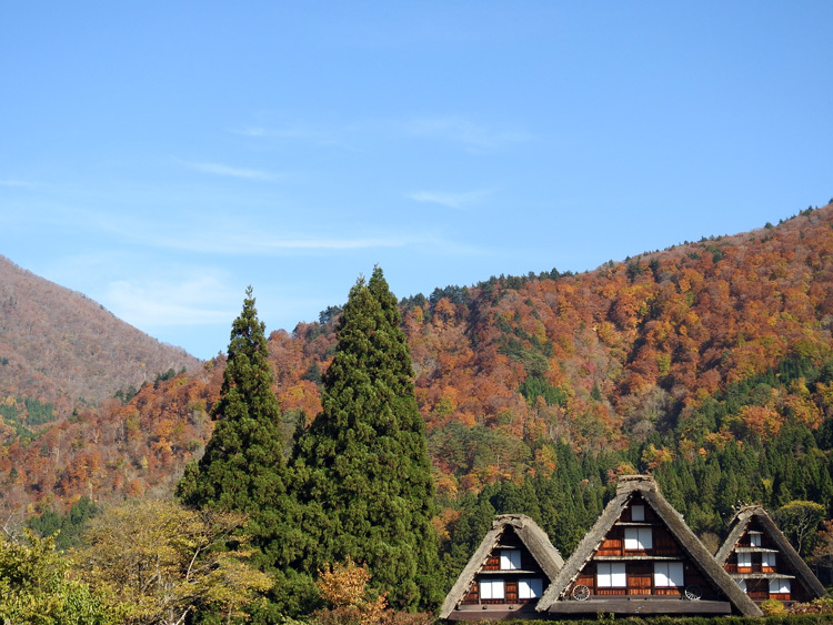 白川郷 紅葉も落葉が少しずつ進み、冬の足音が…5