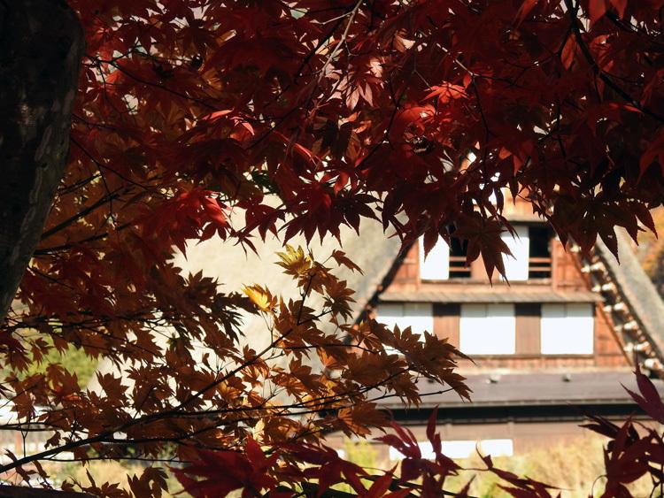 白川郷 紅葉も落葉が少しずつ進み、冬の足音が…7