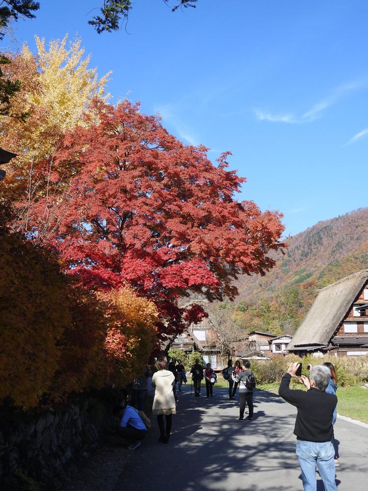 白川郷 紅葉も落葉が少しずつ進み、冬の足音が…8
