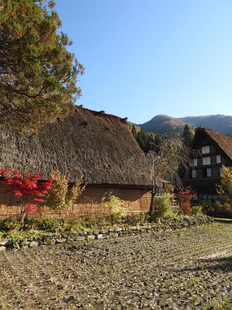 白川郷 紅葉も落葉が少しずつ進み、冬の足音が…10