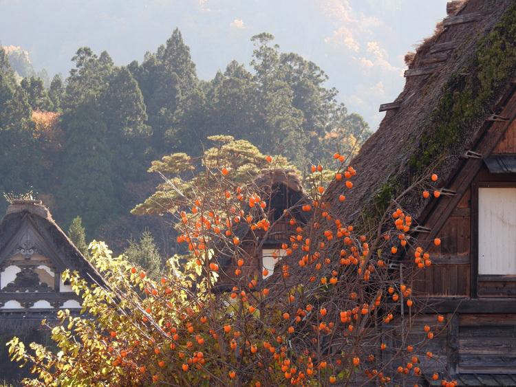 白川郷 紅葉も落葉が少しずつ進み、冬の足音が…11