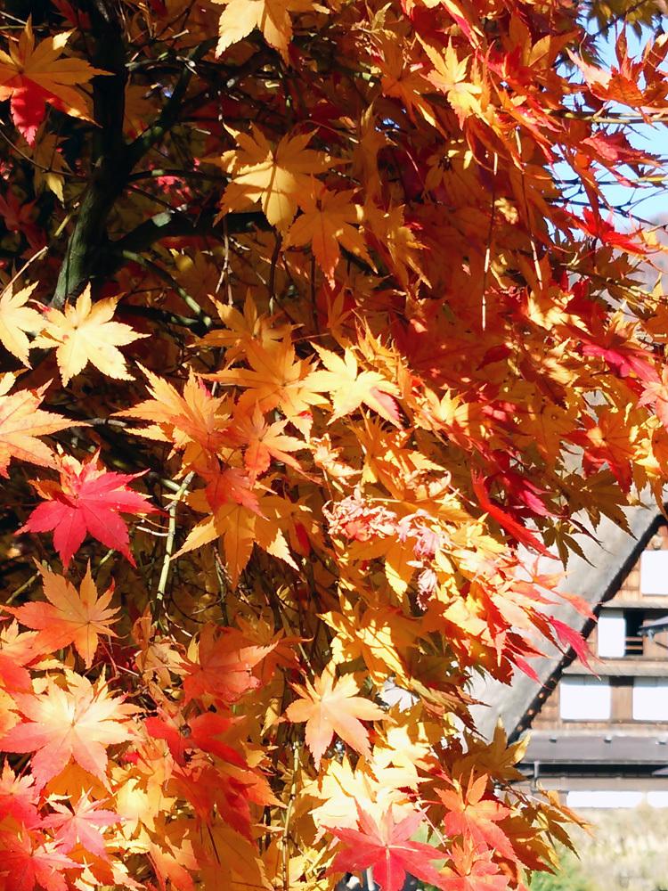 秋から冬へと移り行く白川郷の景色も1