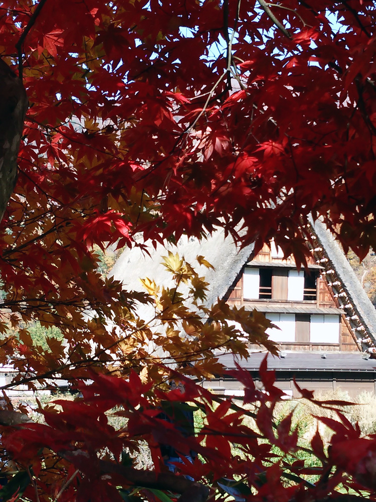 秋から冬へと移り行く白川郷の景色も2