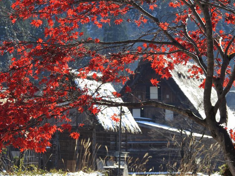 まだ少し残る紅葉と雪の景色がとてもキレイです白川郷8