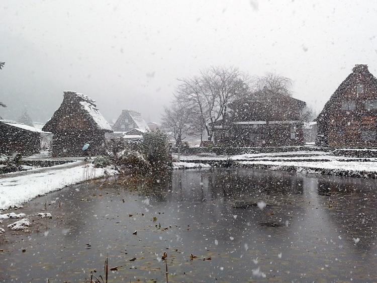 今日は湿った雪が降っており、視界が。。白川郷5