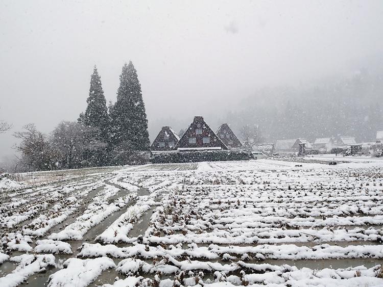 今日は湿った雪が降っており、視界が。。白川郷6