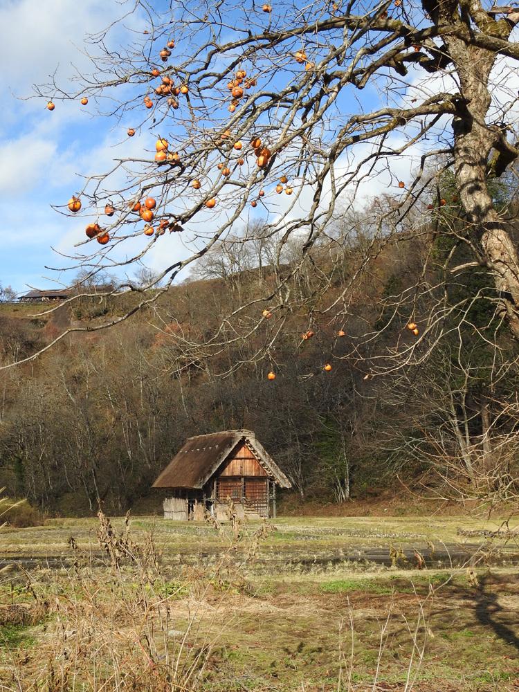 毎年冬の訪れを感じると、思わず浮かべるあの風景 白川郷 2