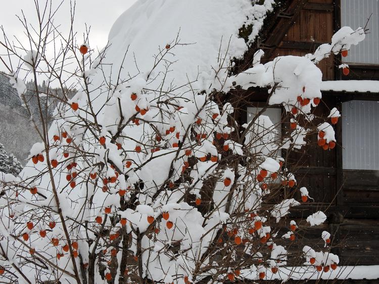 今日は、最近の寒さに比べると暖かい白川郷8