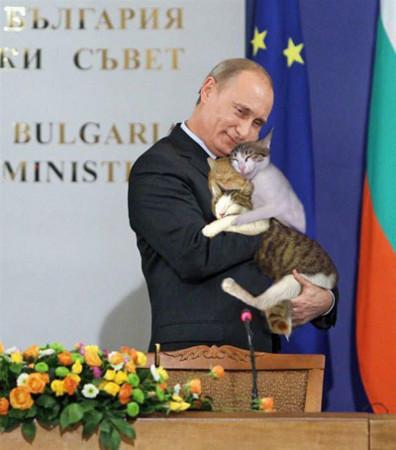 プーチン猫