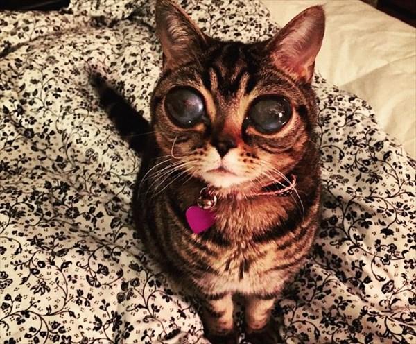 エイリアン猫
