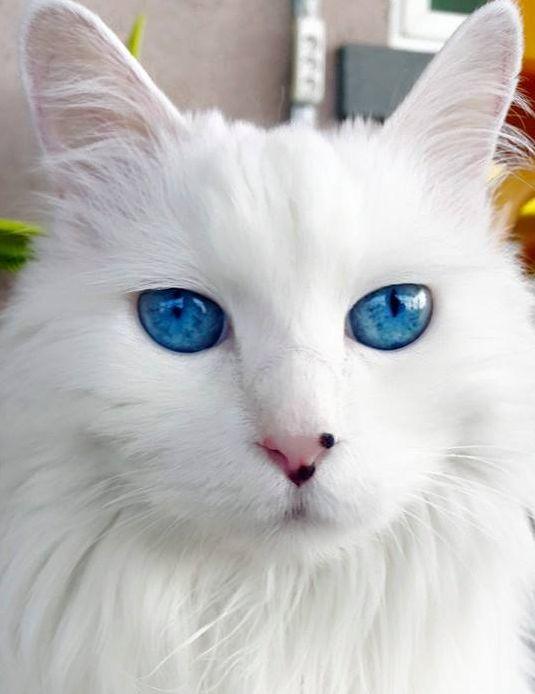 ブルーの眼