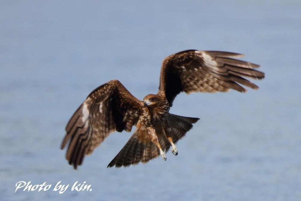 Black Kite ♪ ~トビ PART2~