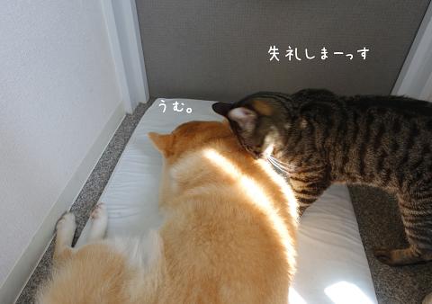 ☆DSC09180 (1E)thum