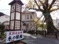 木の根橋2