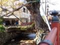 木の根橋1