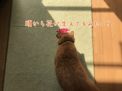 20171010-092532-01.jpg