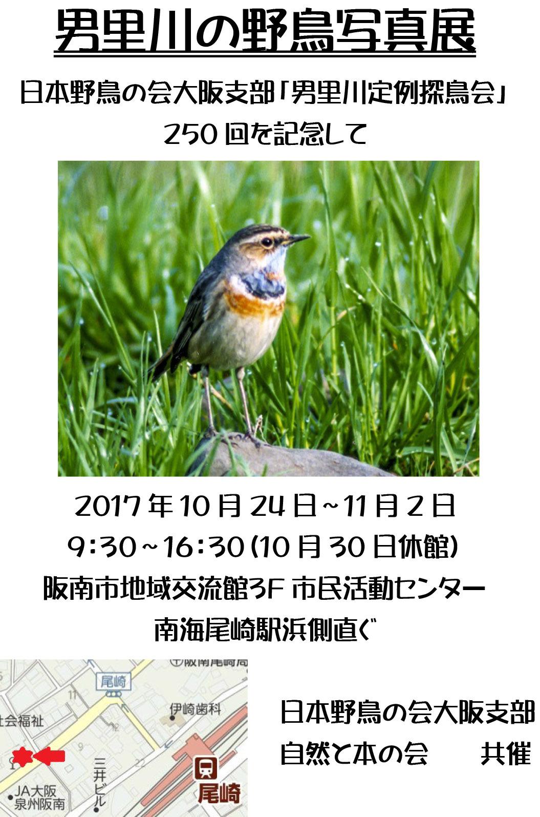 男里川の野鳥写真展案内
