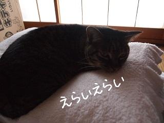 4kazoku2-2.jpg