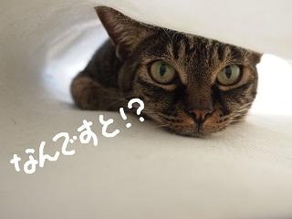 4kazoku7-2.jpg
