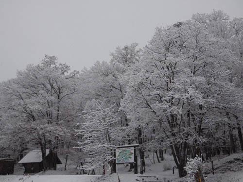171206 森林公園2