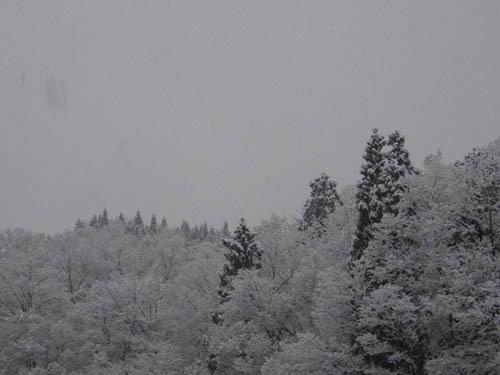 171206 森林公園3