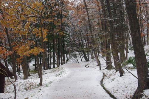 171124中ノ沢渓谷森林公園2
