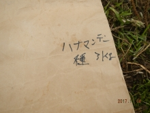 hanamanten (1)