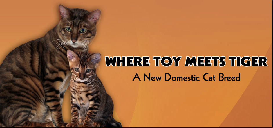 Where-Toy-Meets-Tiger.jpg