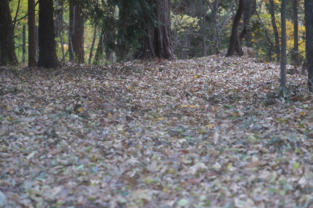 落ち葉でいっぱいの雑木林