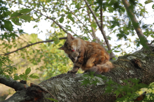 木の上のキジ