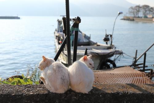 白猫姉妹2