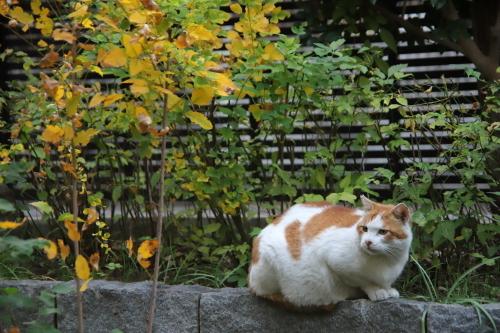 黄色い葉っぱとおれ