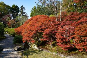 2017依水園紅葉