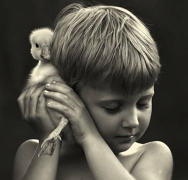 sons-with-farm-animals-elena-shumilova-07.jpg