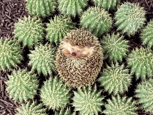 wallpaper-cactus-photo-12_convert_20171010200255.jpg