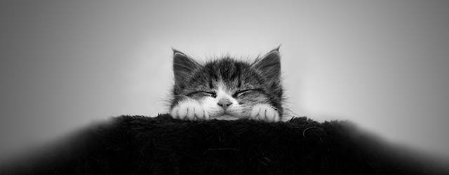 wallpaper-monochrome-cat-tn.jpg