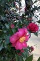 IMG_0058_S.jpg