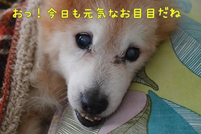 c-DSC_7988.jpg