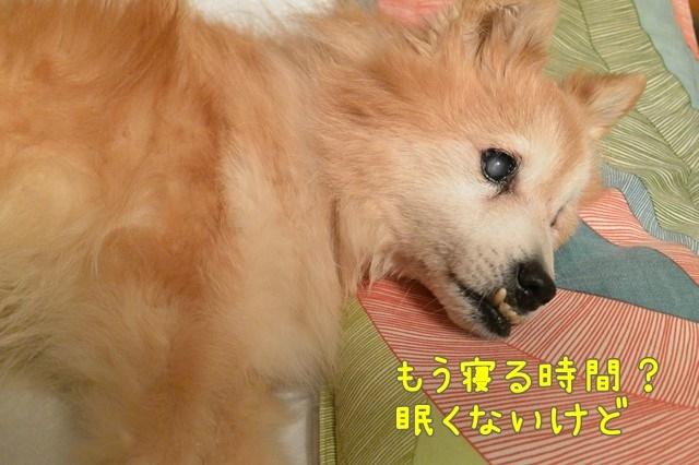 c-DSC_8011.jpg